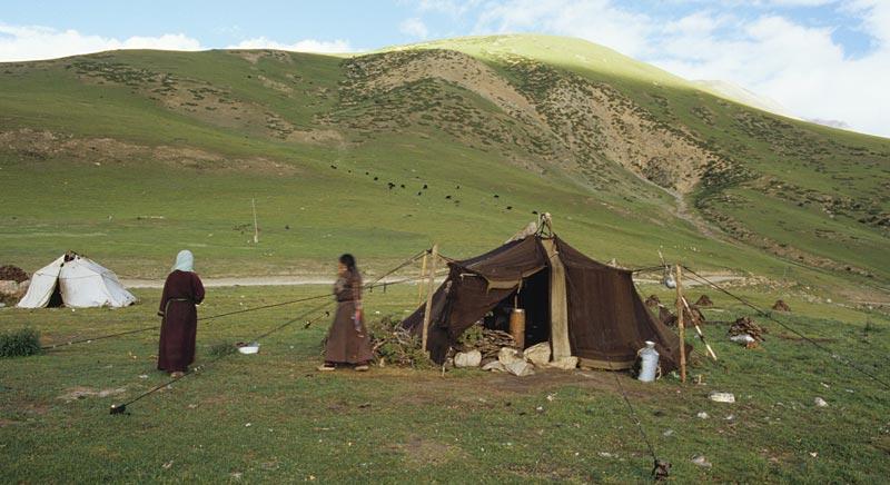 Pastoral Nomads: Wild Yak Films